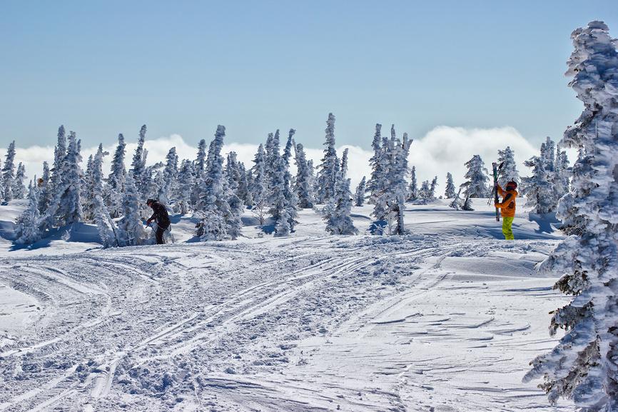 Лыжники и ели на вершине горы Зеленая в Шерегеше © Сергей Водяницкий / Фотобанк Лори