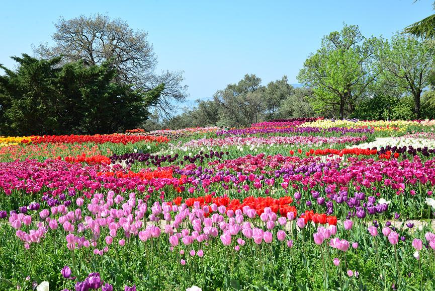 Никитский ботанический сад. Ялта. Крым © Игорь Архипов / Фотобанк Лори