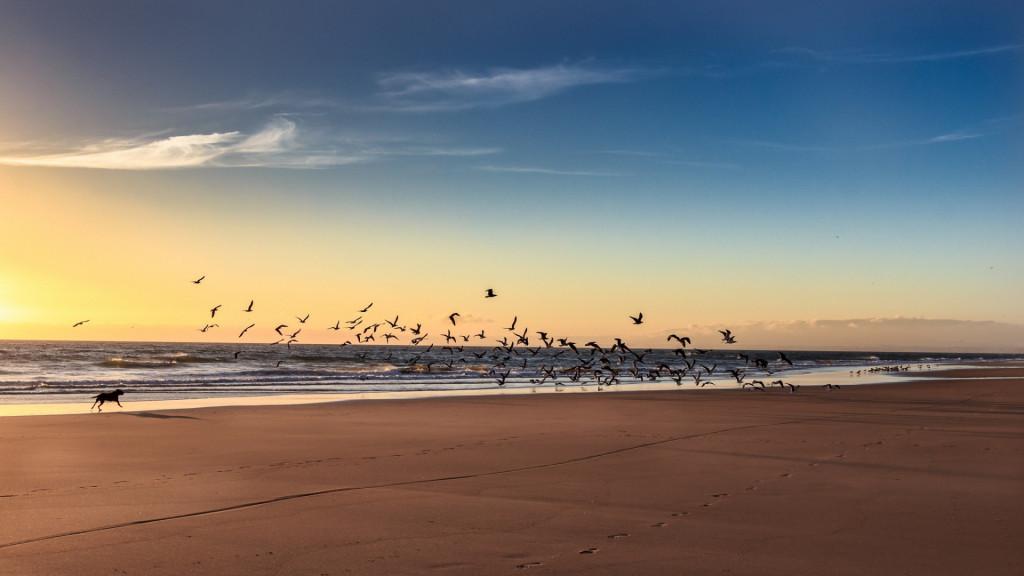 more-plyazh-pticy-sobaka