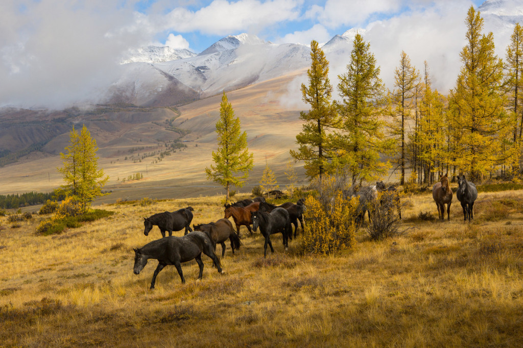 autumn-landscapes-of-Altai-10