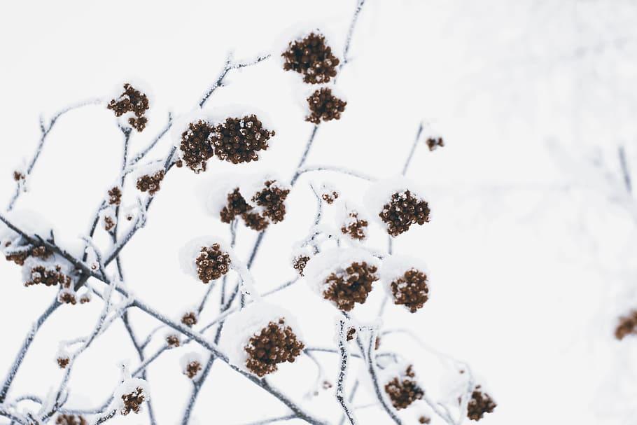 nature-natural-nature-snow