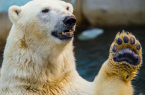 High_five_At_the_zoo_Novosibirsk_Siberia_24.07.2012
