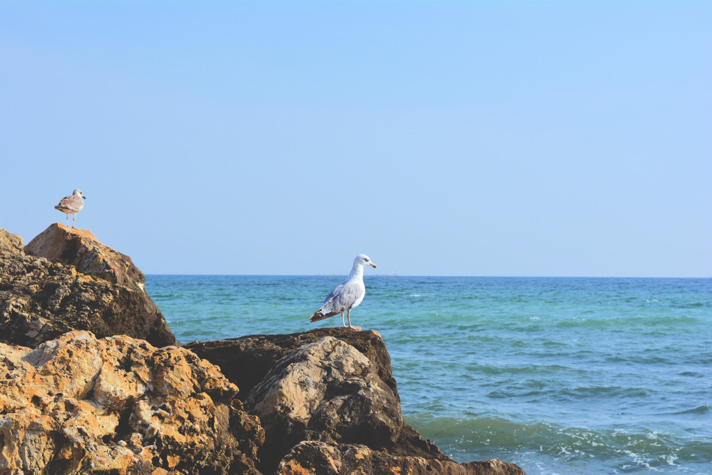 beach-sea-coast-sand-rock-ocean-horizon-sky-shore-wave-stone-vacation-cliff-seaside-tower-gull-bay-blue-terrain-body-of-water-great-cape-romania-black-sea-785448