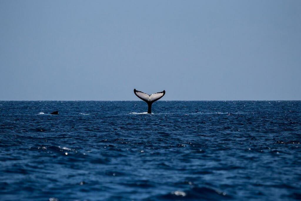 whale-1118876_1920-1024x682