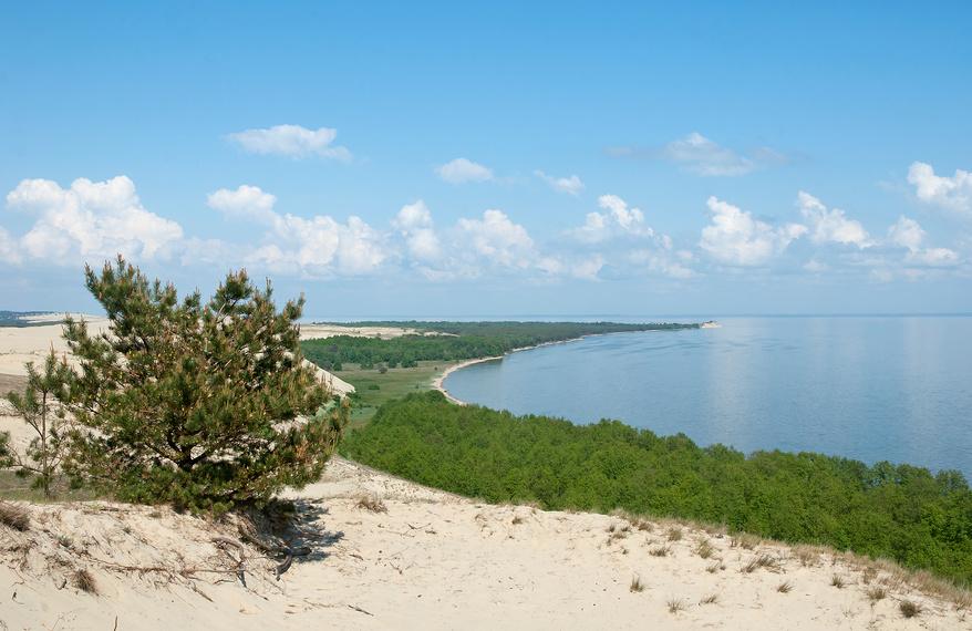 Красивый природный пейзаж, сосна на склоне дюны. Куршская коса © Svet / Фотобанк Лори