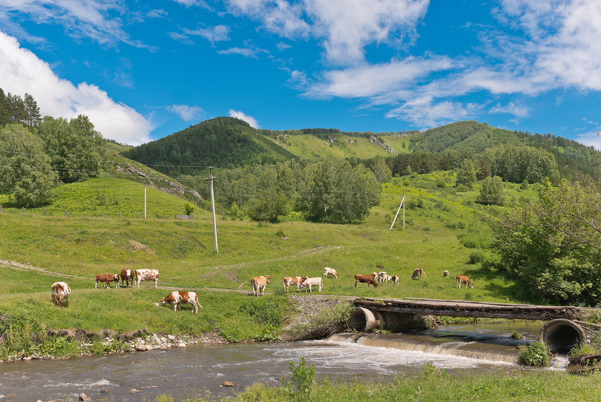 Россия, Алтайский край © Александр Циликин / Фотобанк Лори