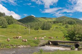 Россия, Алтайский край; село Сараса; река Сосновка
